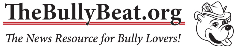 The Bully Beat
